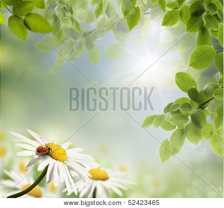 Spring background with daisies and ladybug