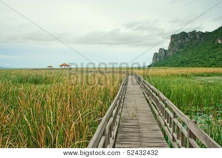 Wooden bridge across swamp