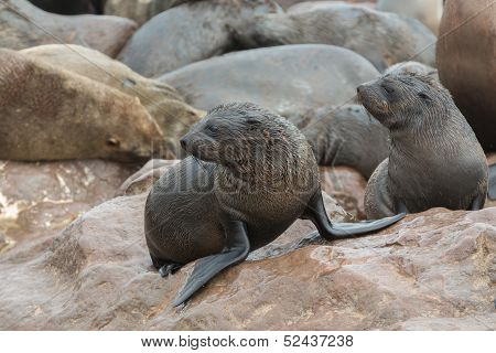Young Sea Lions
