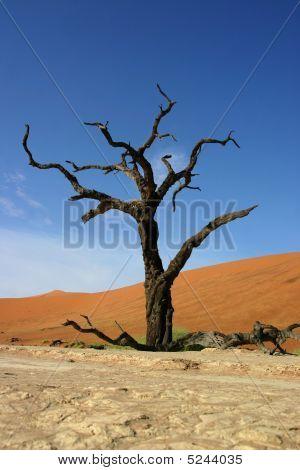 Tree With Dunes