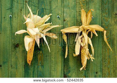 Two corns hang on a green wooden door