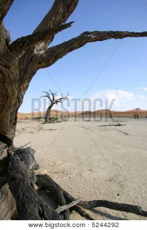 Tree In Deadveli