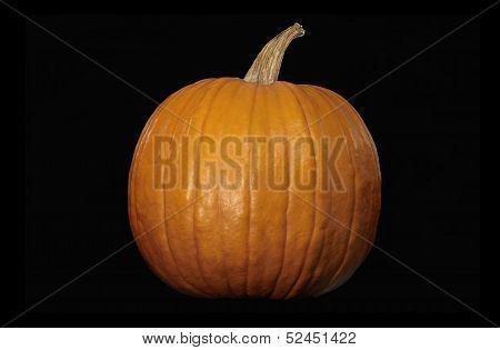 Whole Large Pumpkin on Black Background