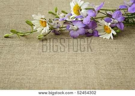 Delphinium And Daisies On Canvas