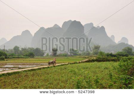 Farmer Pulling A Cart In Fields Near Yangshuo, China