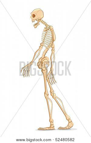 illustration of skelton on white background
