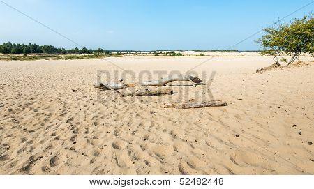 Desolate Sandy Landscape In The Summer Season