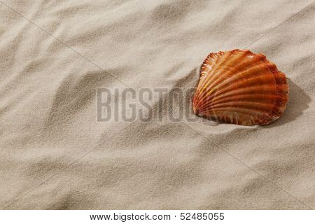 a shell is in the sand of a beach. desire for fair and recreation.