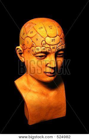 Psychology Model