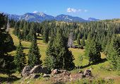 picture of velika  - Velika planina forests landscape - JPG