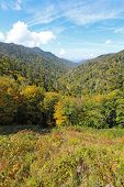 image of gatlinburg  - Autumn leaves starting to turn in Great Smoky Mountains National Park against a bright blue sky and white clouds - JPG