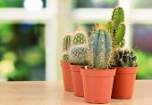 image of cactus  - Collection of cactuses - JPG