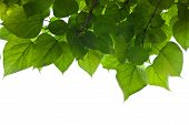 stock photo of photosynthesis  - leaves and sky - JPG