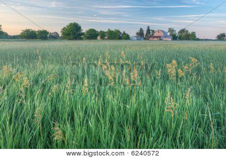 Summer Farmstead