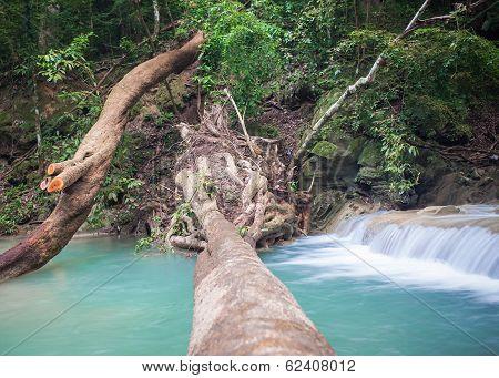 Tree Falling Down, Across Waterfall