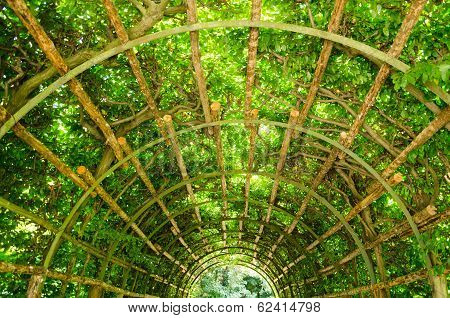A Tunnel Of Greenery In Potsdam, Brandenburg, Germany