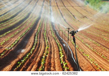 Sprinkler Irrigated Newly Planted Field
