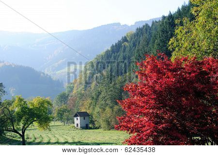 Landscape in the Black - forest