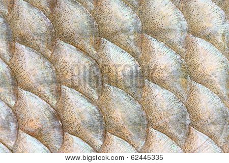 Natural background from fish scales (The Common Bream - Abramis brama)