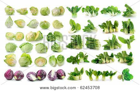 Bok Choy (chinese Cabbage) , Cabbage  Isolated On White Background