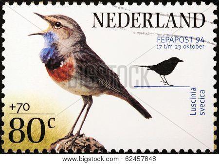 Bluethroat Stamp
