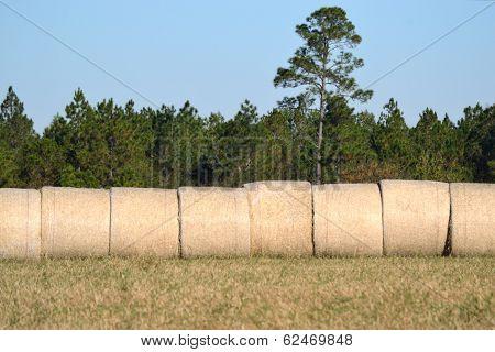 Landscape Hay Bales Under Blue Sky