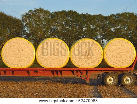 Round Cotton Modules Loaded On Flatbed