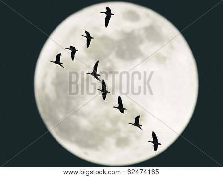 Flying Geese With Full Moon