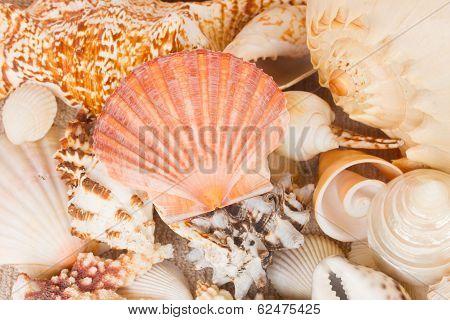 pile of seashells