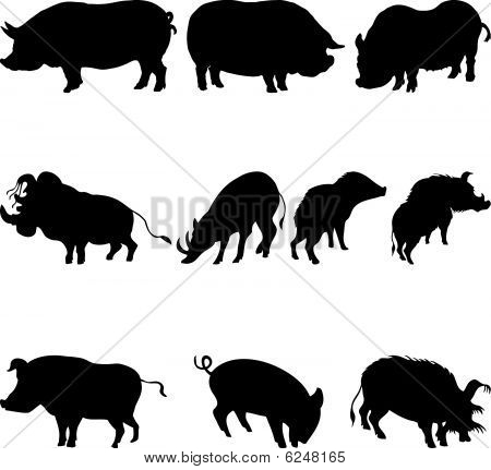 pigs and boars silhouettes set