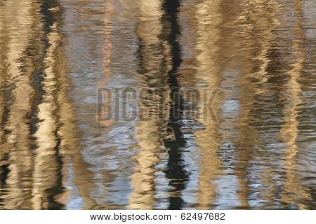 Tree Trunks Reflecting In River
