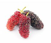 stock photo of mulberry  - Fresh mulberry fruit  isolated on white background - JPG