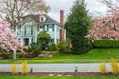 stock photo of manicured lawn  - Stately classic wooden American home on residential street with manicured lawns and cherry trees in bloom - JPG