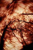 image of infernos  - Tree inferno vortex on red background sky - JPG