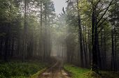 picture of mystical  - Beautiful nature photography inside the forest in Spain - JPG