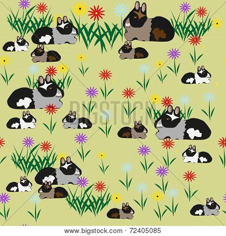 Pattern of guinea pigs and colors