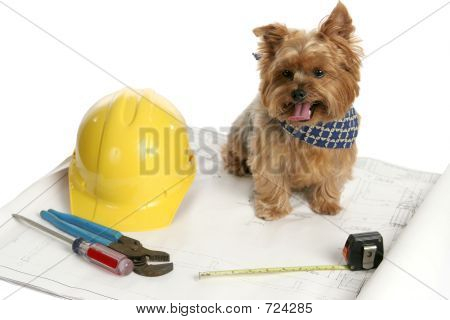 Canine Architect