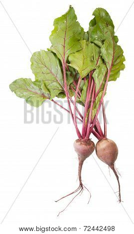 Two Beet Roots