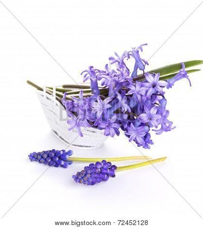 Fresh Scillas Flowers