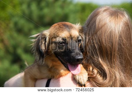 Young Woman Is Holding A Dog