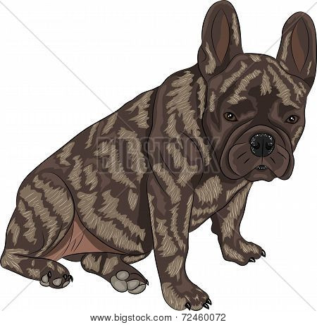 Vector French Bulldog