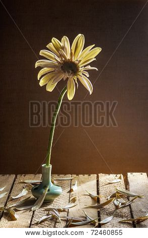 Still Life White Gerbera Small Vase