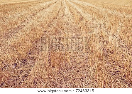Wheat Stubble Field