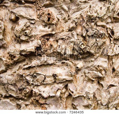 Cabbage Tree Bark Texture
