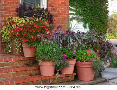 Flower Pots On Steps