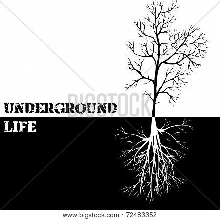 Vector background with tree and roots