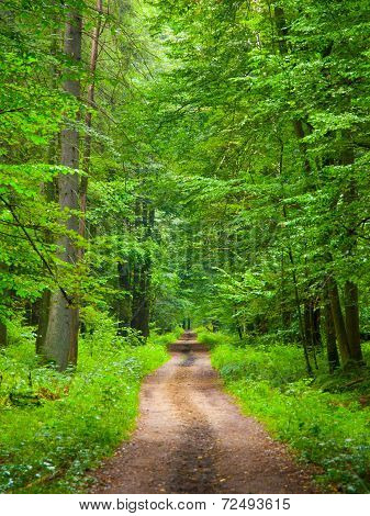Endless forest road