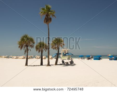 white sandy beach with palm trees in clearwater florida