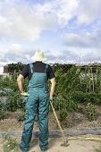 stock photo of hoe  - rear view of a farmer looking at his urban vegetable garden standing wearing a hat and a dickey holding a hoeing on his right hand - JPG