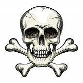 pic of skull cross bones  - vector skull and crossbones on white background - JPG